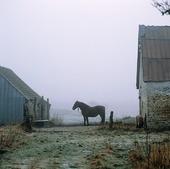 Häst vid dimmig bondgård