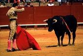 Tjurfäktning, Spanien