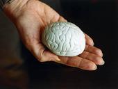 Hjärna i hand