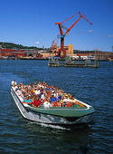 Toad in the Gothenburg port