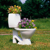 Blommor i toalett