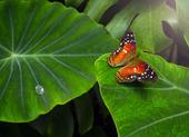 Fjäril på ett blad