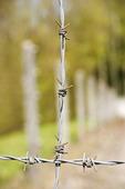 Taggtråd i Dachau