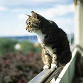 Katt på räcke