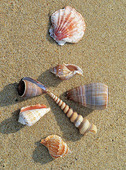 Snäckskal på strand