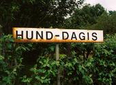 Hund-Dagis