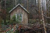 Liten övergiven stuga i skog