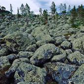 Stenig mark i Stora Sjöfallets nationalpark, Lappland