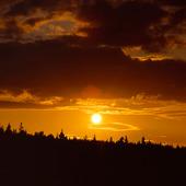 Solnedgång bakom granskog