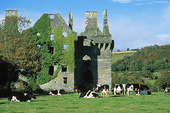 Kor vid ruin, Irland