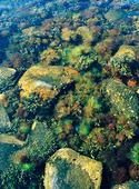 Alger och tångväxter i havsvatten