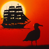 Segelfartyg och mås i solnedgång (montage)