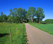 Landsväg - sommar