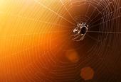 Spindelnät med färgstark bakgrund