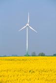 Wind turbines at the rape fields