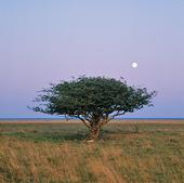 Träd på Öland