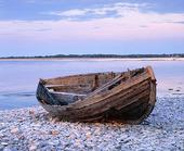 Gammal eka på strand, Gotland