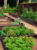 Trädgårdsodling