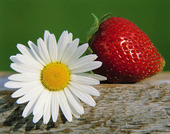Blomma och jordgubbe