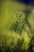 Växt i solljus