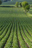 Jordbruksland