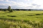 Sädesfält i Hälsingland