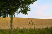 Sädesfält