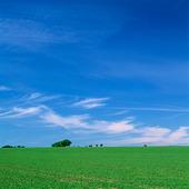 Blå himmel med grönt fält