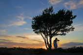Flickan och trädet