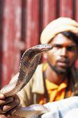 Kobra, Nepal