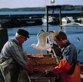 Yrkesfiskare