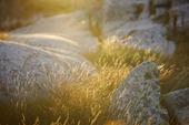 Naturen i Bohuslän