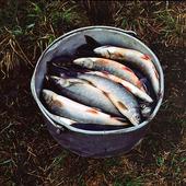 Fiskfångst i spann