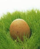 Ägg i gräs