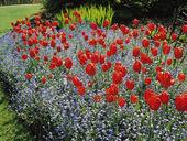 Trädgårdsblommor