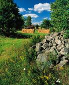 Odlingsmark med hässjor