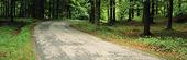 Asfalterad skogsväg