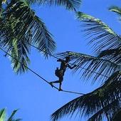 Man plockar kokosnötter, Sri Lanka