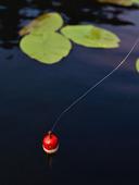 Fiskeflöte i sjö