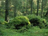 Stenar i skog