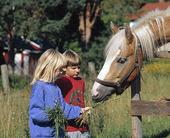 Child feeding horse