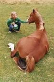 Flicka vid liggande häst
