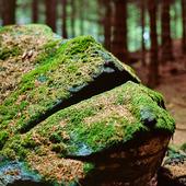 Sten i skogen