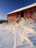 Ladugård i vinterlandskap