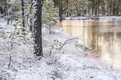 Morgon med frost