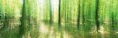 Lövskog, rörelseexponerad