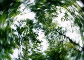 Idébild - snurrande träd
