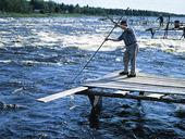 Sikfiske i Torne Älv, Norrbotten