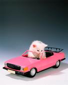 kattunge i bil