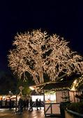 Ljusslingor i träd på Liseberg